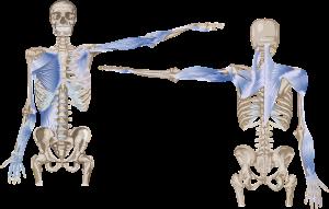 anatomy-3042569_1920